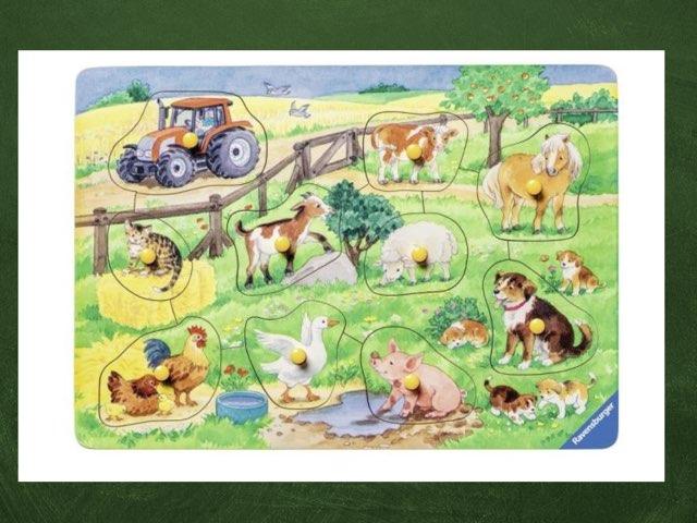 Boerderijdieren by René Visser