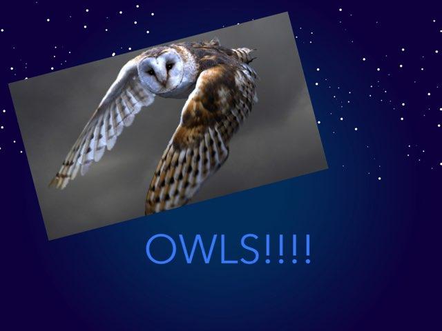 Owls by Jane Miller _ Staff - FuquayVarinaE