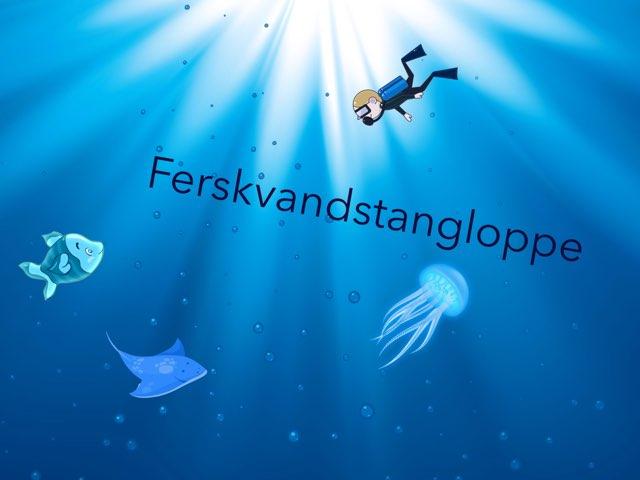 Ferskvandstangloppe by Elev Skibet