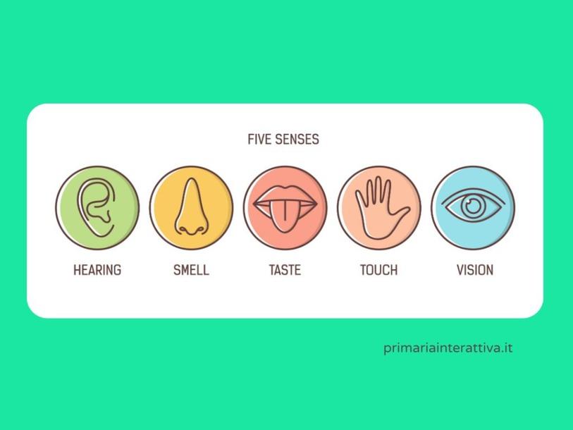 FIVE SENSES by Primaria Interattiva
