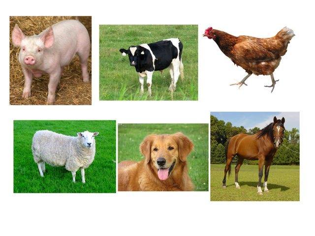 Farm Animal Guess by Quinn Mc