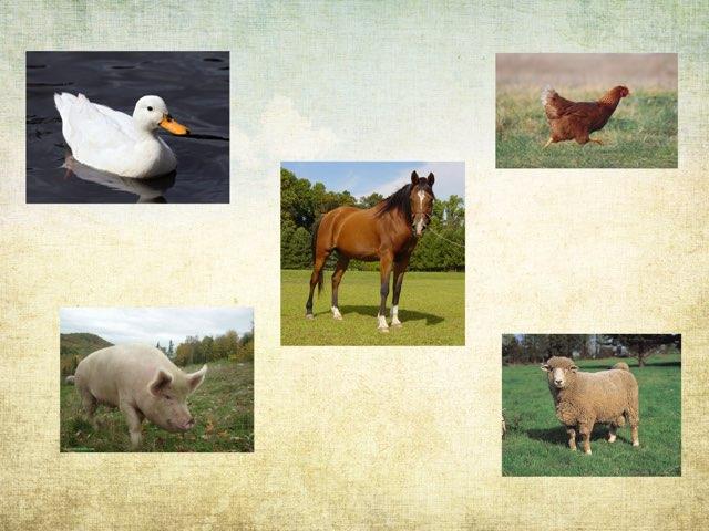 Farm Animals by Beaufort school