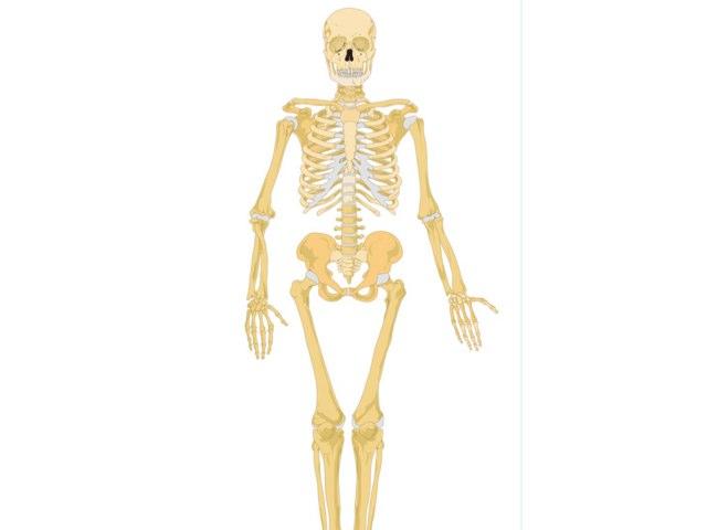 Faye Skeleton by Mr Parkinson