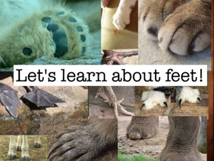 Feet Are Neat  by Michelle Kelly