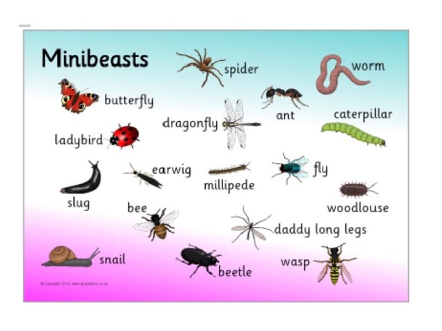 Fernvale Find The Mini Beasts Game  by Rebecca Johnson