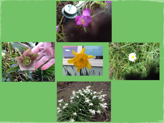 Fernvale Plant Game Yellow Group by Fernvale  Primary Primary