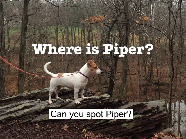 Find Piper by Gideon Fruchter
