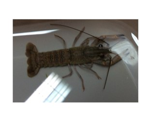 Find the Structures of a Crayfish by mrs RA