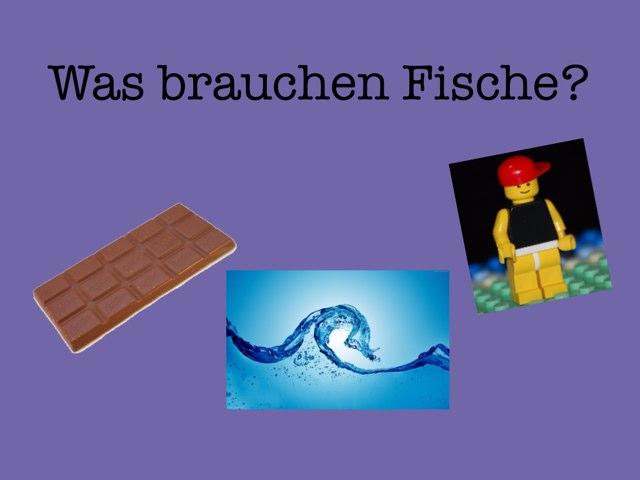 Fischquiz 1 by Schüler GESS