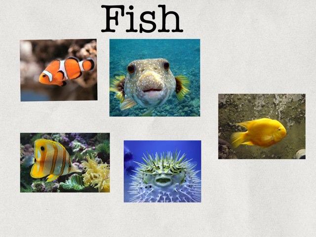 Fish  by Emilie Melnyk