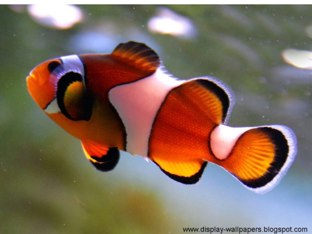 Fish by Denise Distel