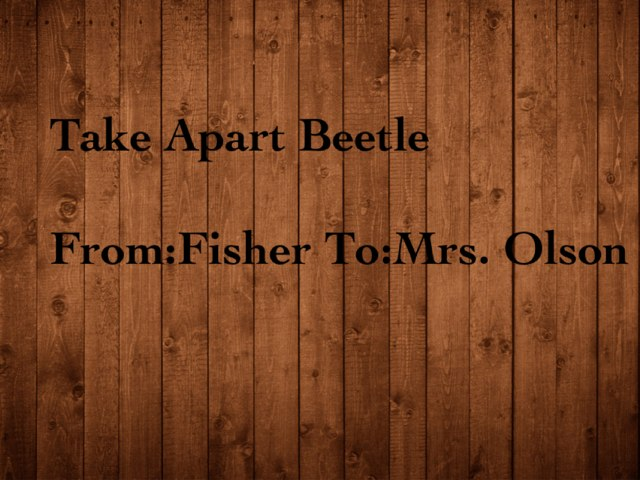 Fisher's Beetle Project by Stephanie Olson