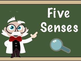 Five Senses by Elliott Kern