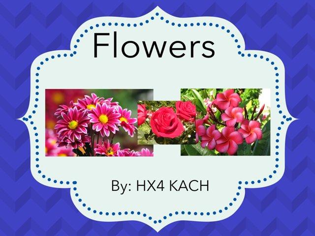 Flower Parts by hx4 kach