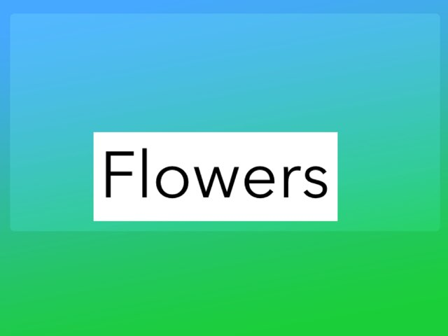 Flowers by Claire by Claire Haverly