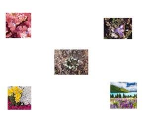 Flowers by Jade Wilkinson