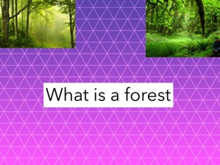 Forest By Drew by Paula Isaacson