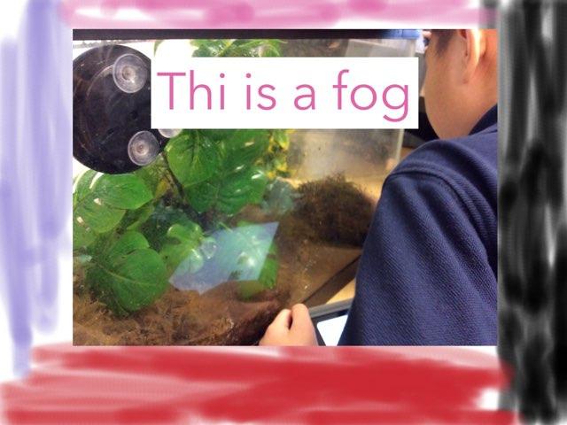 Frog J.J.  by Sarah Bosch