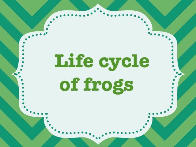 Frog Life Cycle by Obsessed Fa