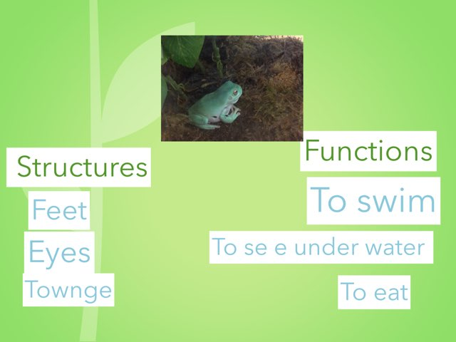 Frog Structure And Function by Sarah Bosch