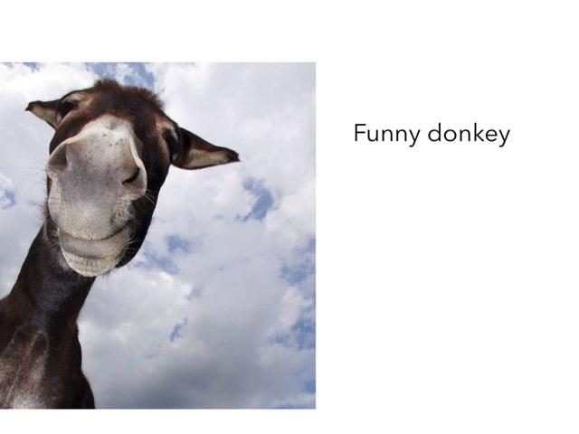 Funny Donkey by mcpake family