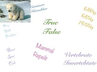 Polar bear by Tracy Bye