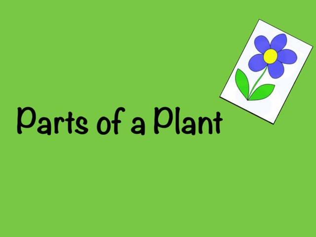 Parts of a Plant by Kristi Bray