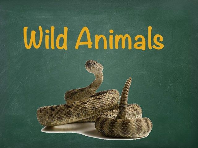 Wild Animals by Bente Andsbjerg