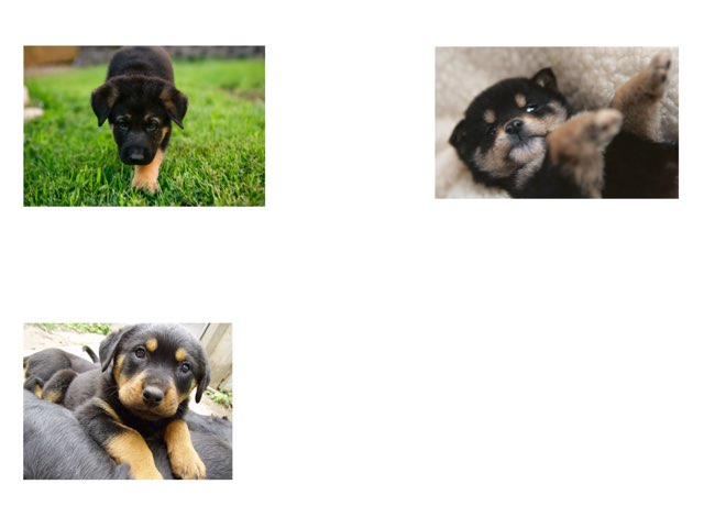What   puppies do you need to pick by Nicole Pestell
