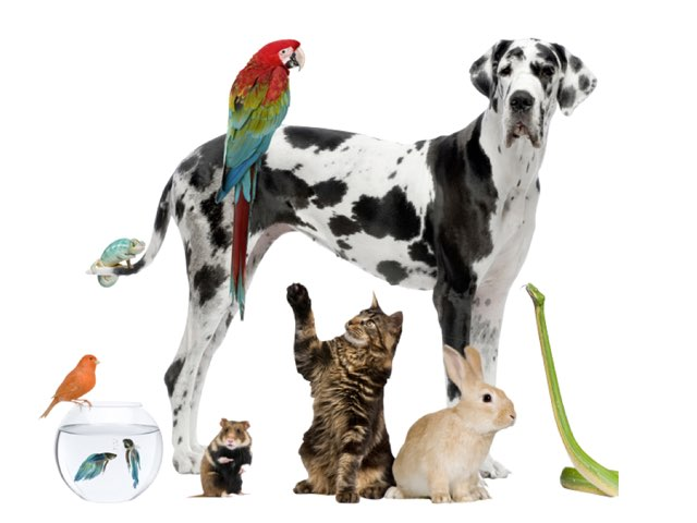 Can you find these pets? by Amy keup