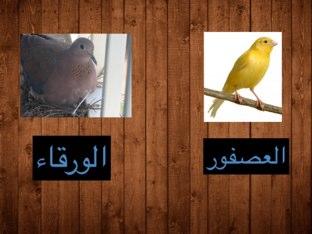 قصيدة ياطير by Manayer Almuseeree