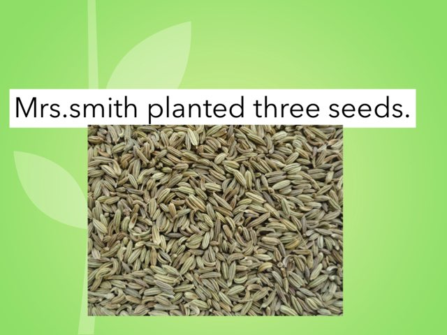 Mrs.smith planted three seeds by Khoua Vang