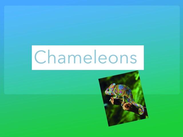 Chameleons  by Jane Miller _ Staff - FuquayVarinaE
