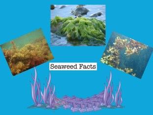 Seaweed Facts by Linda Lonergan