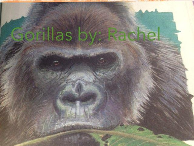 Rachel's gorilla report by Leslie Roberts