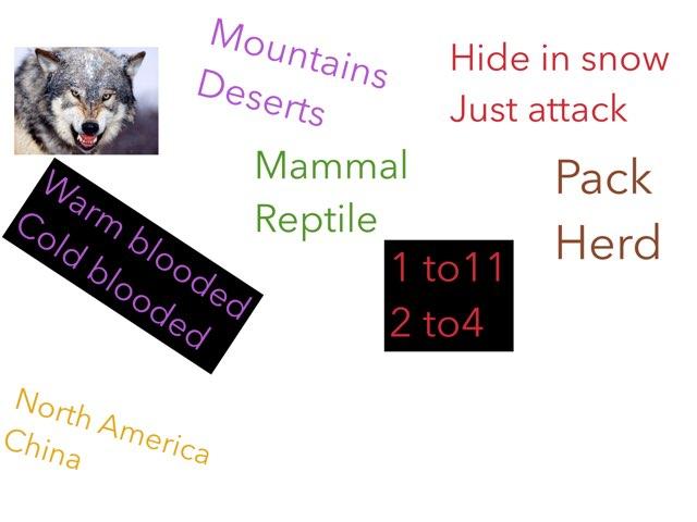 Wolf quiz by Tracy Bye