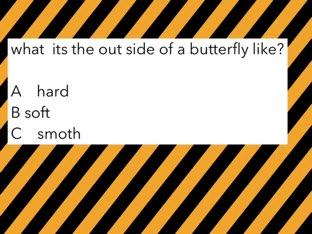 butterflies  by maggie ellis
