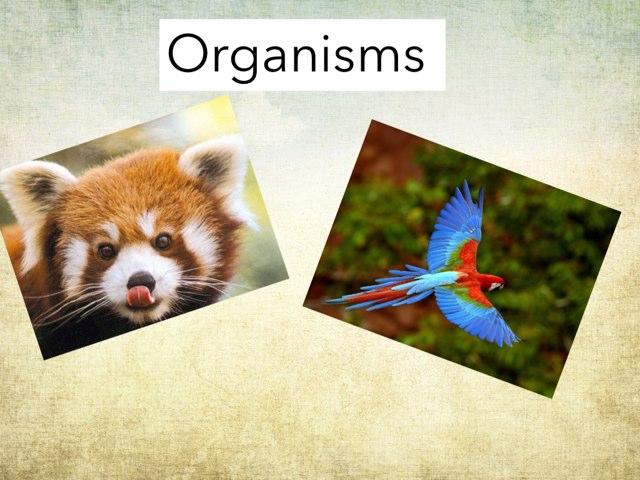 Organisms  by Alex waldner