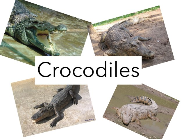 Croc by Leanne Walker