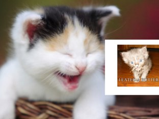 More funny cats by Jodie Tranter
