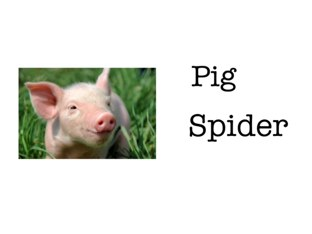 """Animal vocabulary """"pig"""" for Charlotte's Web  by Maureen Nevers"""