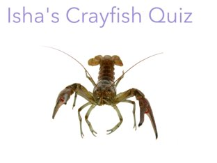 Do you want to know about Crayfish? This is a great educational game for children to see. by Debra  Joyce
