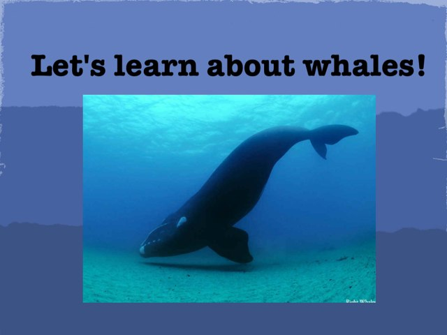 Learn about whales by Michelle Kelly