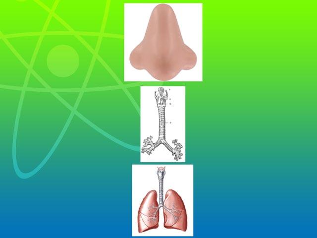 Lungs by Rooa rashied