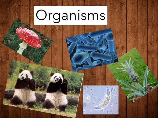 Our project about organisms   by Alex waldner