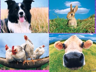 Farm animals  by Nicole Pestell