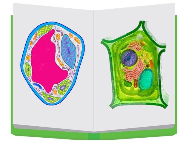 خلية by Rooa rashied