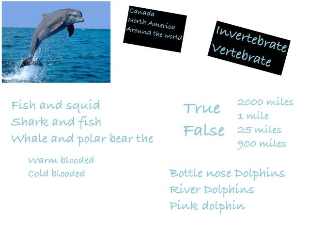 Dolphin Quiz by Tracy Bye