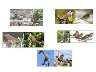 bird quiz by Steven Bergen