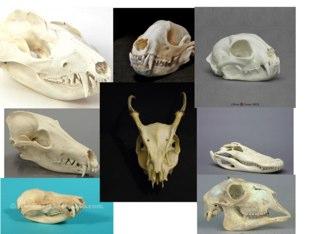 Bones  by Michelle Kelly